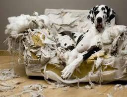 dog training mastery multimedia package