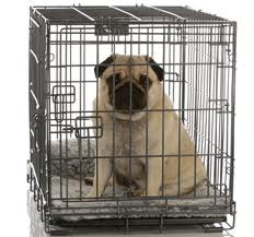 crate train bulldog