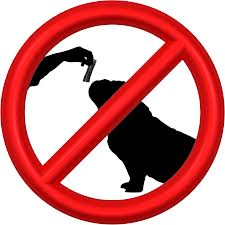 stop chihuahua barking