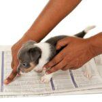 how to potty train a yorkie puppy