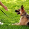 How to Train Your Dog to Come on Command