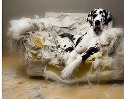 dog chews everything