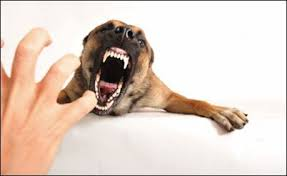 dog food aggression