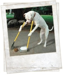 how to stop dog poop accidents