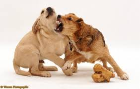 Stop Dog Aggression Over Food