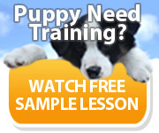 puppy need trainingbanner-180-150